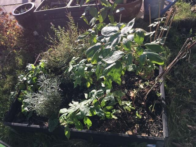 Urban farming - hvad er det?